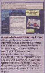 cork whale watching