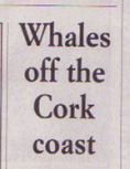 west cork whale watching